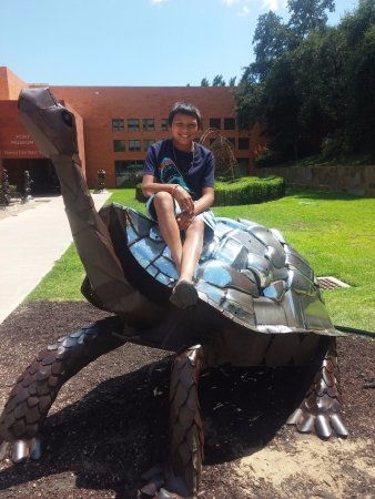 Fort Worth Museum of Science & History: Here's the famous Museum School turtle outside. It's made of recycled auto materials.