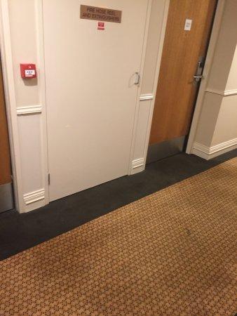 Glenelg, Australien: smelly wet mouldy carpet