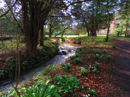 Cambo Estate Gardens: stream beside the house