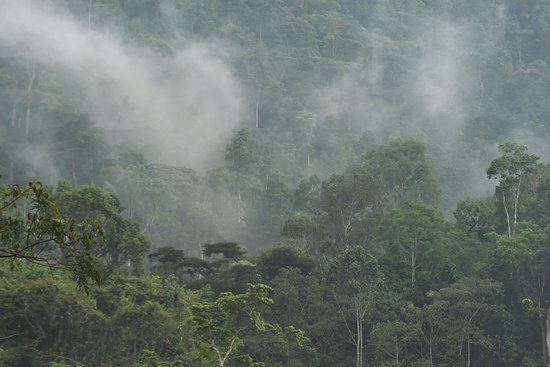 The Buhoma Community Rest Camp: Bwindi impenetrable forest after a shower