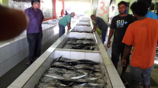 Buyers for fish - Picture of Male Fish Market, Male - TripAdvisor