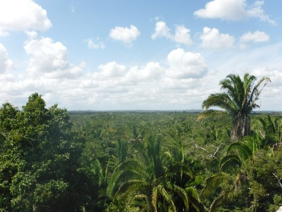 Distretto del Belize, Belize: The top of the High Temple