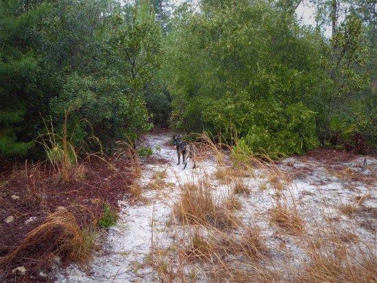 Eustis, FL: Trailmaster Buc