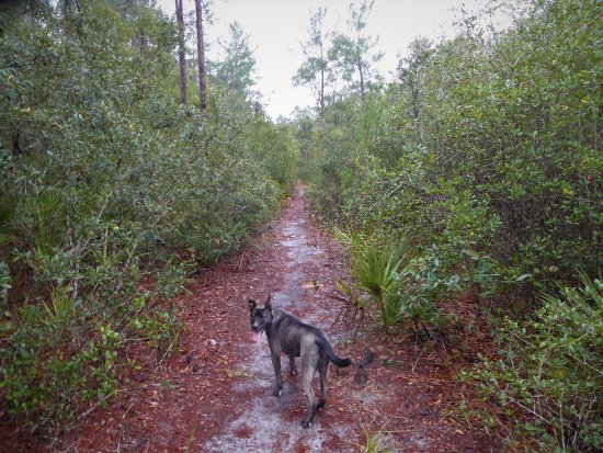 Eustis, FL: Buc says let's hike!