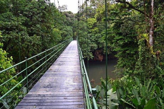 Sarapiqui صورة فوتوغرافية