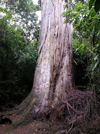 写真Talbot Forest Scenic Reserve枚