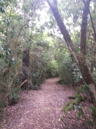 Geraldine, Neuseeland: Well maintained and easy-walking pathway in Talbot Forest.