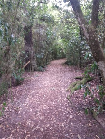 Geraldine, Nueva Zelanda: Quiet - except for the sounds of birds - peaceful walkway in Talbot Forest..
