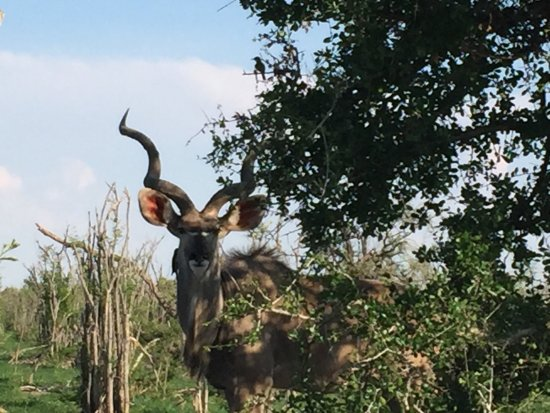 Makgadikgadi Pans National Park, Botswana : photo2.jpg
