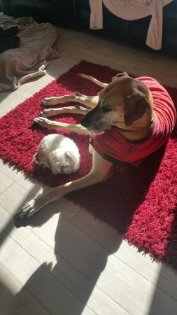 Rutherglen, Avustralya: Princess is so protective of our new rescue girl. Coco chanel. She loves meeting our new guests