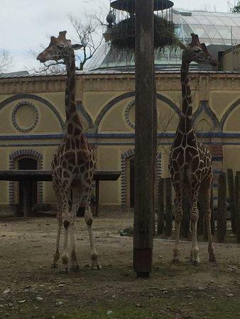 Zoologischer Garten (Berlin Zoo): photo0.jpg