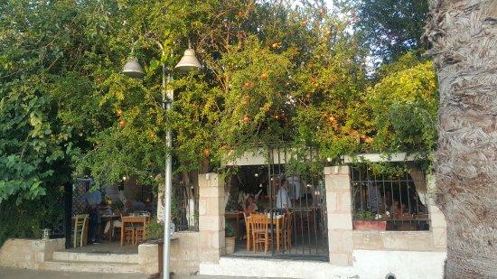 Lemonokipos Restaurant : Večera u vrtu limunova