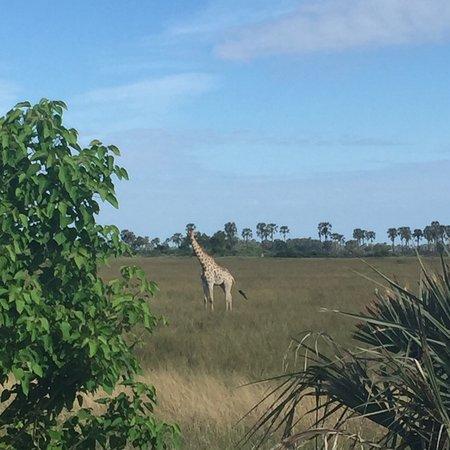 Maun, Botswana: photo6.jpg