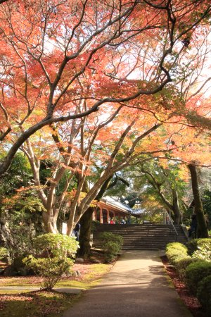 Izumi, Japan: 2015.11.28撮影