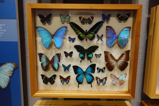 Butterfly Rainforest: Before the Rainforest Many Specimens