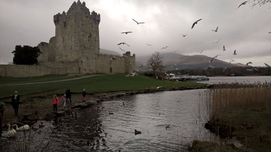 Ross Castle: wildfowl at lake