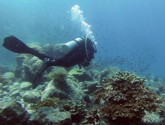 Panama Dive Center: Diving with coral & fish.