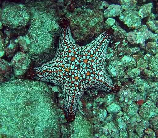 Panama Dive Center: Starfish