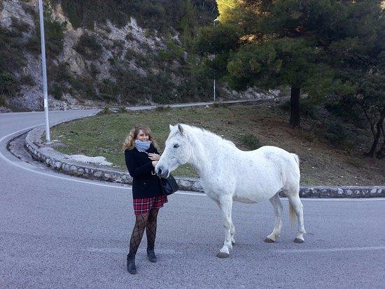 Castello di Arechi: white horse waiting for us