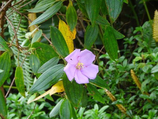 Pahoa, HI: Flower in the park