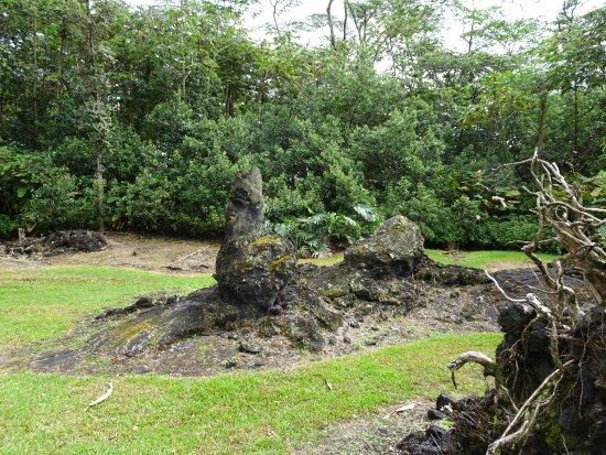 Pahoa, HI: More Lava Trees