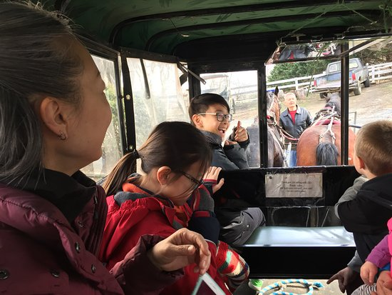 Ed's Buggy Rides: Our son got to ride in the front seat