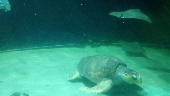 Atlantic City Aquarium Historic Gardner's Basin : Tank2