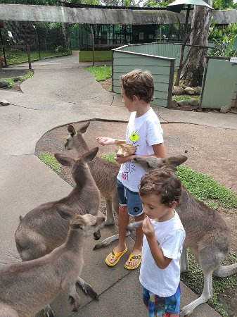 Kuranda (เมืองคูรันดา), ออสเตรเลีย: Breakfast with the kangaroos