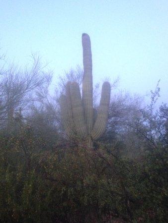 Saguaro Lake Guest Ranch-bild