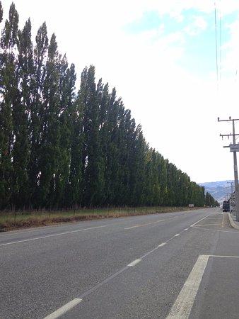Cromwell, Nouvelle-Zélande : 店門前一排大樹