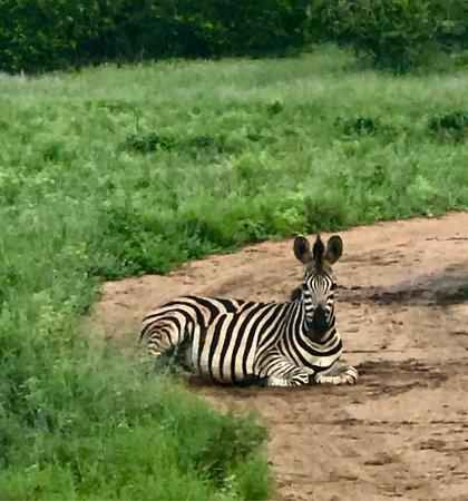 Mala Mala Private Game Reserve, Sudáfrica: photo1.jpg