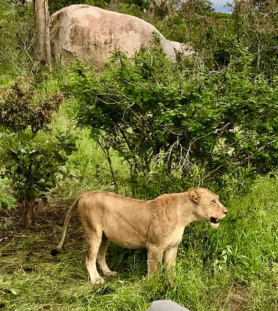 Mala Mala Private Game Reserve, Sudáfrica: photo5.jpg