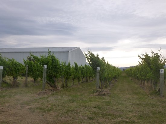 Renwick, New Zealand: Vineyards