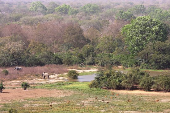 Mole National Park, Ghana: Overlooking waterhole from viewing platform