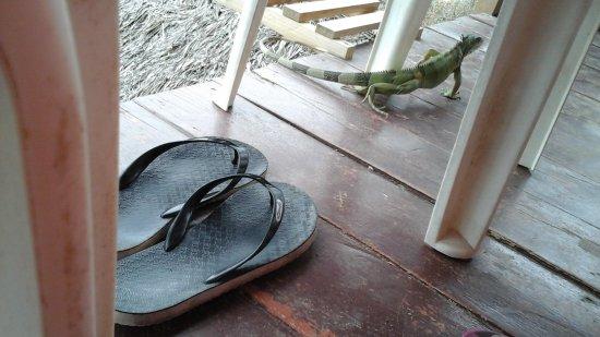 La casa del sombrero  Der kleine Leguan wohnt auf dem Balkon. La casa del  sombrero  Hier kann man die Seele baumeln lassen 414cc047a6a