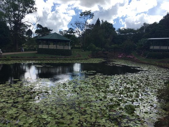 Maleny, ออสเตรเลีย: Gazebos available overlooking ponds