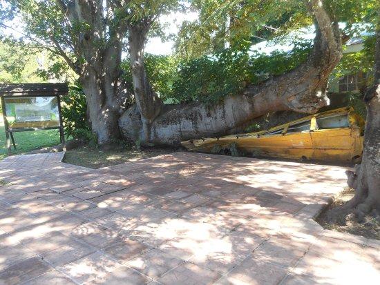 Dominica Botanic Gardens: School Bus