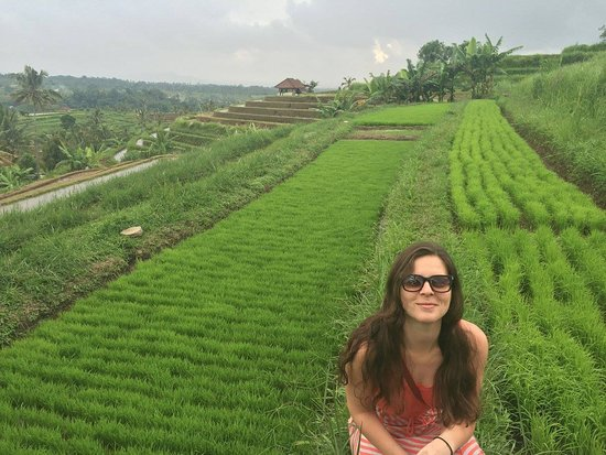 Tegalalang Rice Terrace : Bit of a drive but totally worth spending a day in the lush green rice terrace.