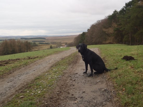 Haltwhistle, UK: on are way back from a long walk.