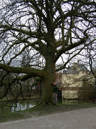 AM/PM: One of the large trees which lined the walking paths along the canal in front of this B&B.
