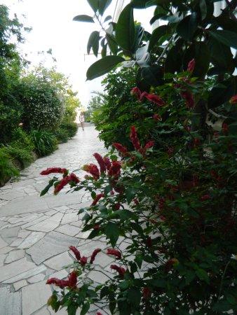 Albergo L'Approdo : il giardino