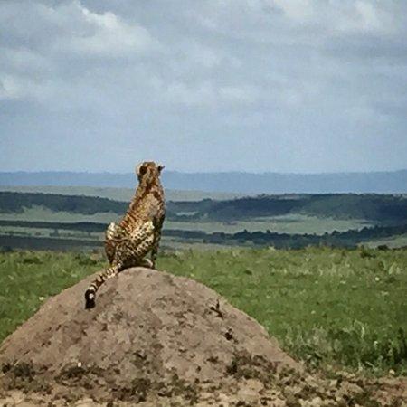Mara Serena Safari Lodge: photo3.jpg