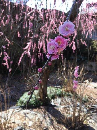 Hondo-ji Temple: photo1.jpg