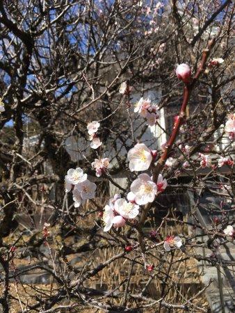 Hondo-ji Temple: photo2.jpg