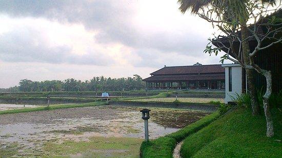 The Chedi Club Tanah Gajah, Ubud, Bali – a GHM hotel: Restaurant midden tussen de rijstvelden