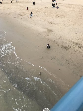 Santa Monica Pier: photo3.jpg