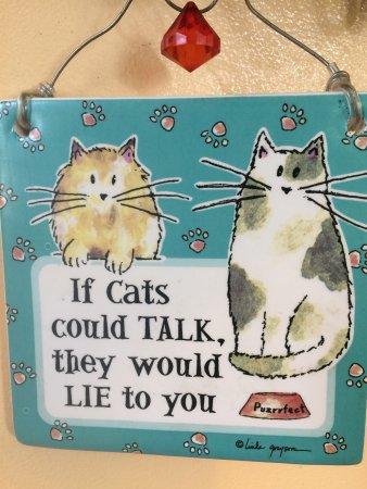 Orange Cat Cafe Photo