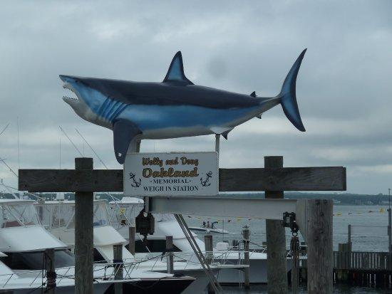 Hampton Bays, NY: views from the restaurant