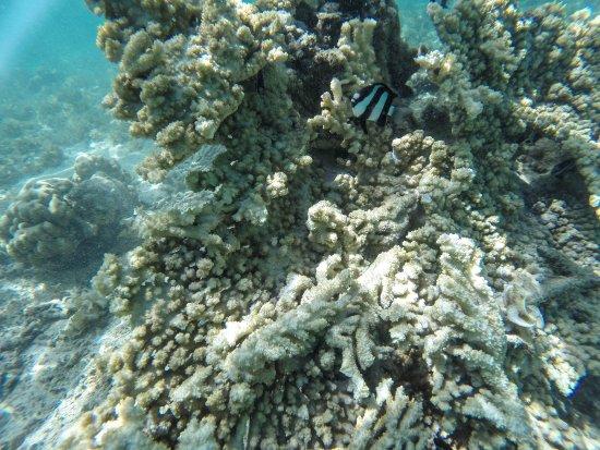 Pearle Beach Resort & Spa: lo snorkeling dal villaggio