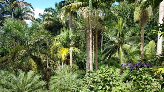 Hunte's Gardens: View from top